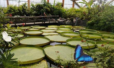 Ken je het Rotterdamse Amazonegebied?