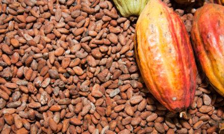 Een tropische verrassing vol cacao