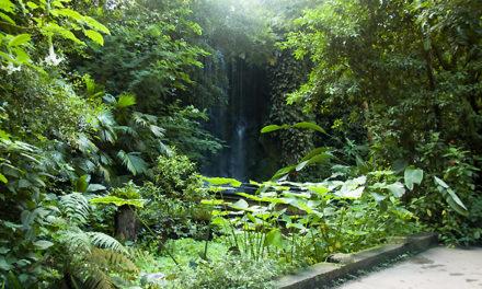 Jaar van de botanische tuinen