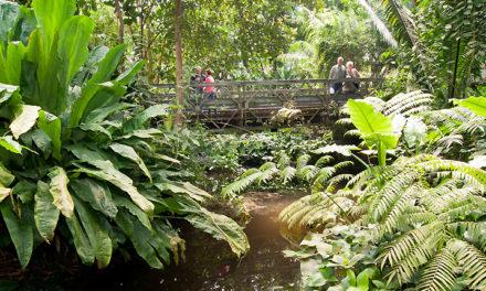 Jubileum Arnhems tropisch regenwoud