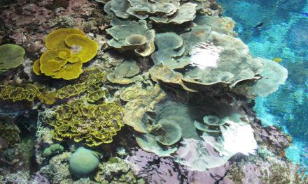 Burgers' Ocean doneert koraal