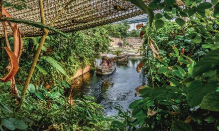 Wereldrecord indoor jungle Rimbula